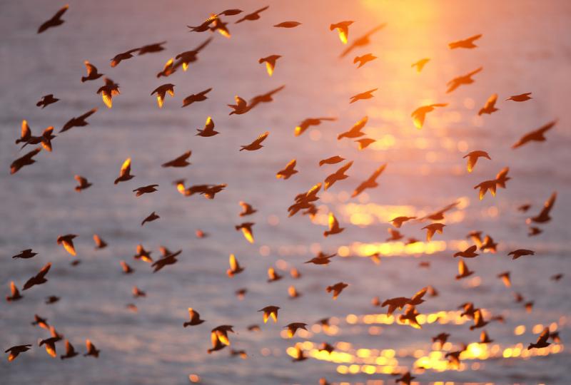 Солнце на закате и скворцы
