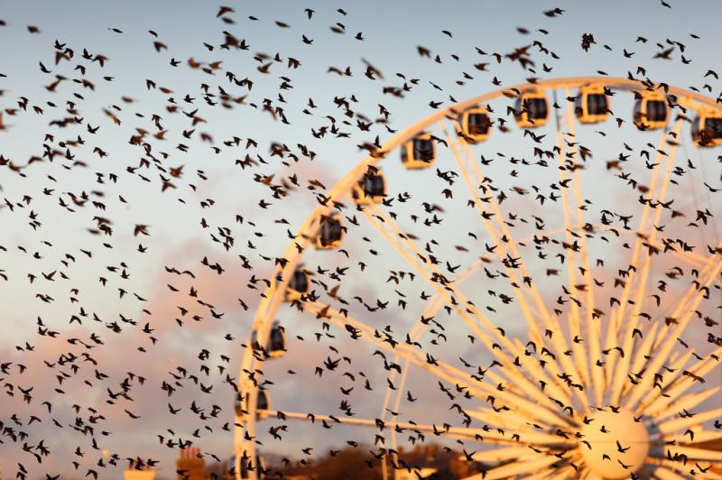 Колесо обозрения и танцующие птицы