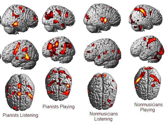 musician mirror neurons