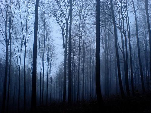 Мрачный Лес 81465824